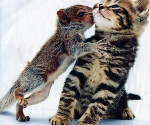 cat, cute, and squirrel image