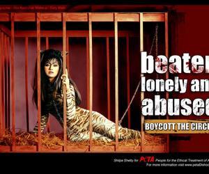 abuse, animal, and animals image