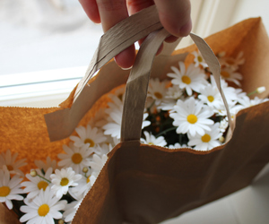 flowers, daisy, and gift image