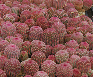 pink, plants, and aouch image