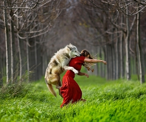 wolf, red, and forest image