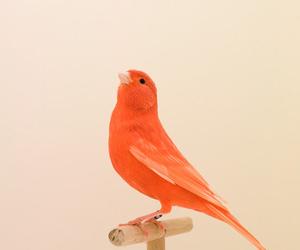 bird, orange, and art image