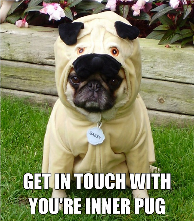 FUNNY PUG DOG MEMES CAPTIONS LOL / Pug in a Pug u0027GET IN TOUCH WITH YOUu0027RE INNER PUG!u0027 & FUNNY PUG DOG MEMES CAPTIONS LOL / Pug in a Pug u0027GET IN TOUCH WITH ...