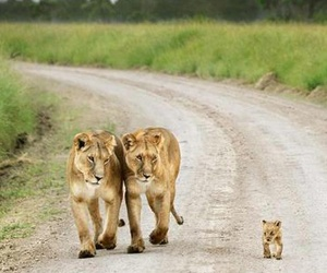 adorable, cub, and family image