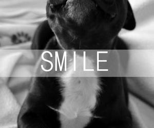 dog, smile, and black and white image