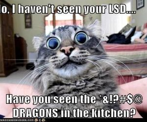 cat, funny, and lsd image