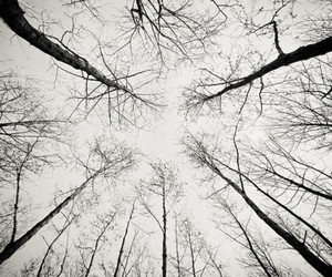 trees, black and white, and forest image