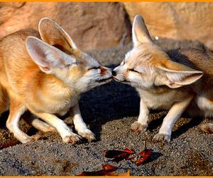 fox, kiss, and animal image