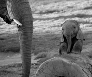 elephant, cute, and animal image