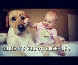 funny, dog, and friday image