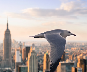 bird, city, and new york image