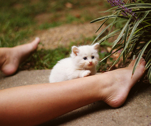 cat, nature, and cute image