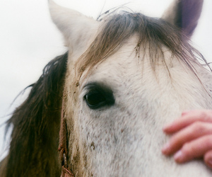 horse, vintage, and animal image