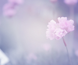 flowers, beautiful, and nature image