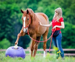 beautiful, horse, and photography image