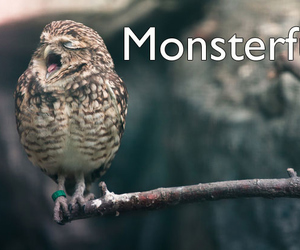 bird, funny, and owl image