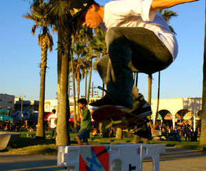 california, palm tree, and skateboard image