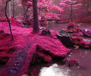 pink, nature, and forest image