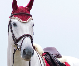 horse, red, and white image