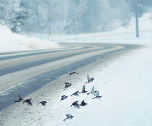 bird, road, and winter image