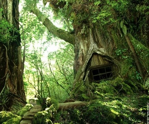 Dream, fantasy, and forest image