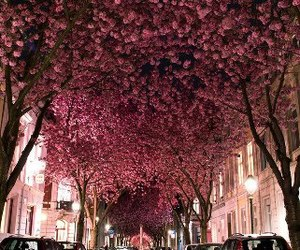 germany and blossom avenue image