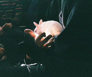 rabbit, light, and hipster image