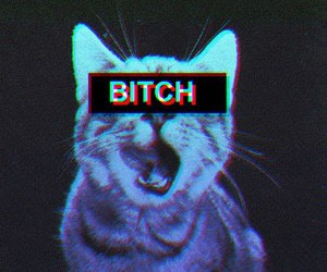 cat and bitch image