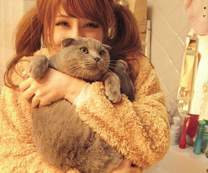 cat, cute, and asian image