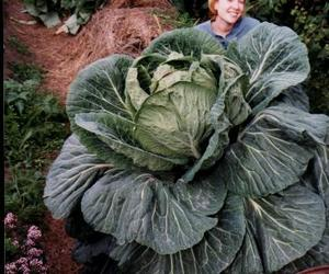 garden and giant vegetable image
