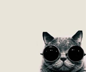 cat, animal, and cat glasses image