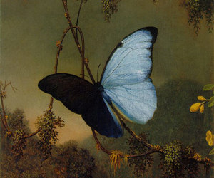 animal, insect, and art image