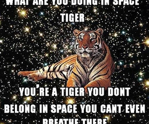 tiger, space, and funny image