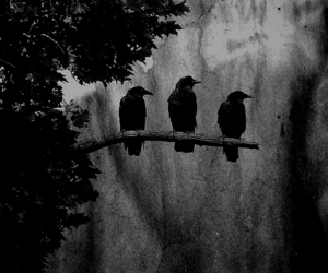 animal, b&w, and birds image