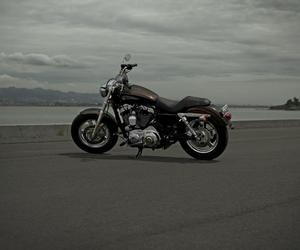 harley davidson and motorcycle image