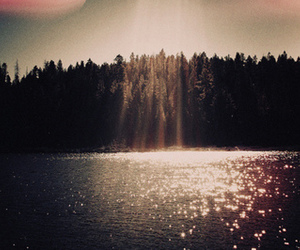 water, sun, and forest image