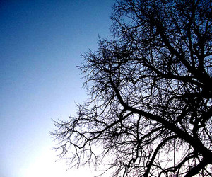 because, blue, and tree image