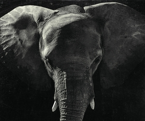africa, animal, and nature image