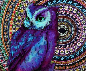 owl, animal, and colors image