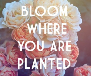 flowers, quotes, and bloom image