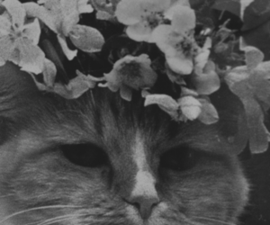 cat and floral crown image