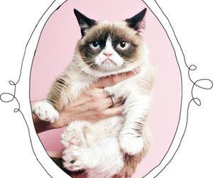 cat, grumpy cat, and pink image