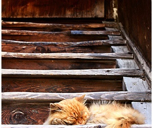 cat, red, and stairs image