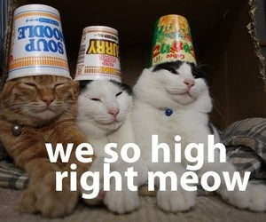 cat, funny, and high image