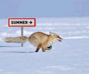 fox, snow, and summer image