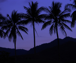 palm trees, mountain, and shadow image