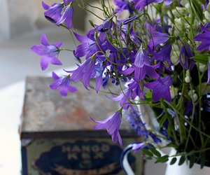 blue, flower, and purple image