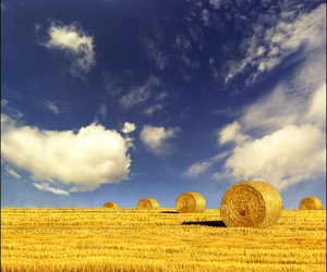 agriculture, cielo, and field image