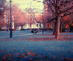 tree, photography, and autumn image
