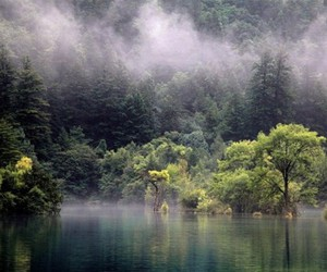 fog, forest, and river image